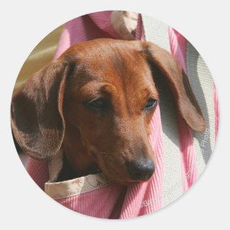 Smooth-haired Miniature Dachshund Puppy Classic Round Sticker