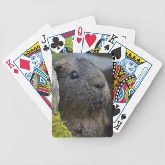 Smooth, Shorthair, Lemon Agouti Guinea Pig in Rock Bicycle Playing Cards