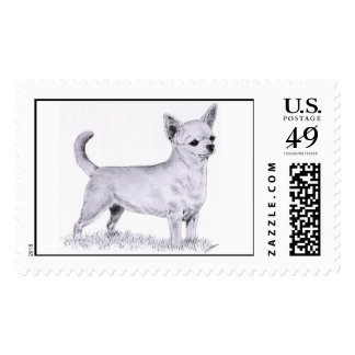 Smoothcoat chihuahua - standing postage stamp