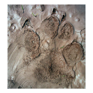Smudged Dog Paw Print Poster