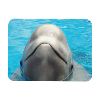 Smug Beluga Whale Flexible Magnet