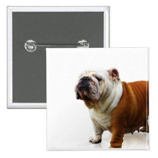 Smug Bulldog Button