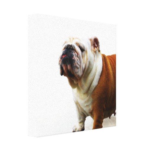 Smug Bulldog Canvas Print