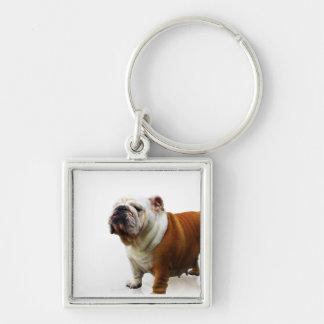 Smug Bulldog Keychain