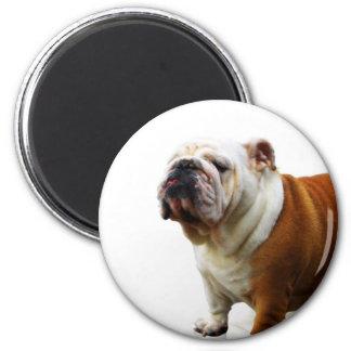 Smug Bulldog Magnet Fridge Magnet