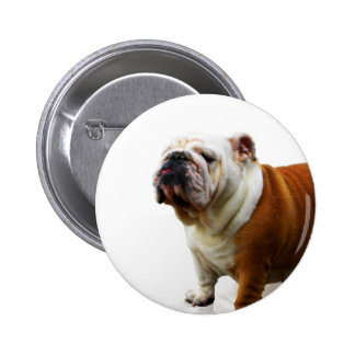Smug Bulldog Pin