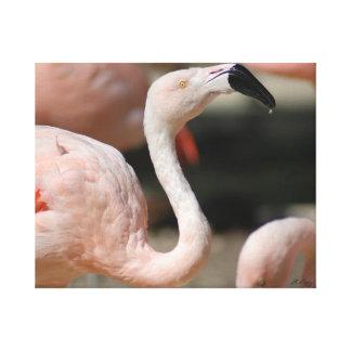 Smug Flamingo Canvas Print
