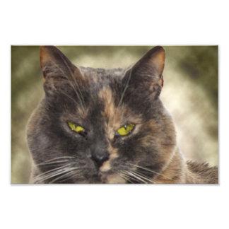 Smug Kitty - Do What You Want? Photo Print