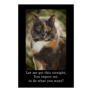 Smug Kitty - Do What You Want? Poster