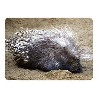 Smug Porcupine With Mop Of Large Hair On Head 5x7 Paper Invitation Card
