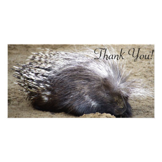 Smug Porcupine With Mop Of Large Hair On Head Card