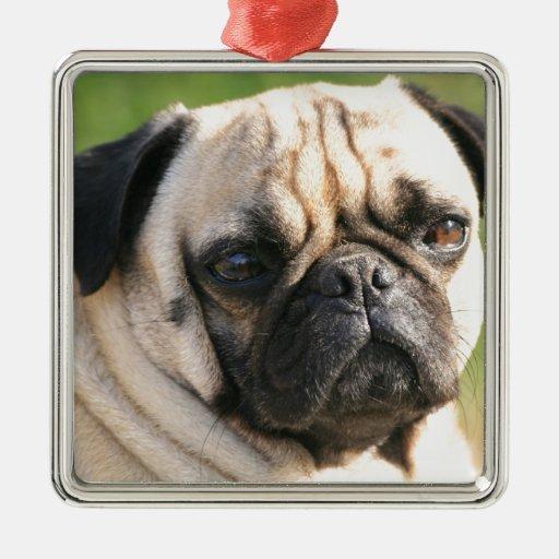 Smug Pug  Ornament