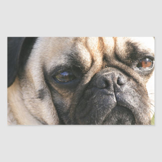 Smug Pug  Stickers