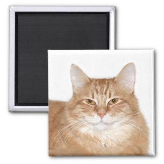 Smug smiling cat fridge magnet