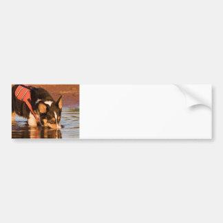 Snack Rescue Bumper Sticker