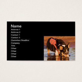 Snack Rescue Business Card