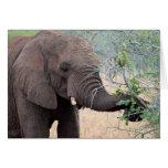 Snack Time - Elephant Card