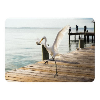 "Snack Time Great White Heron Egret Flat Note Card 4.5"" X 6.25"" Invitation Card"