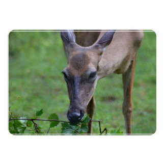 "Snacking Deer 5"" X 7"" Invitation Card"