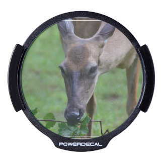 Snacking Deer LED Window Decal