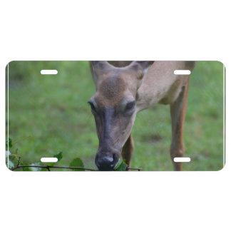 Snacking Deer License Plate