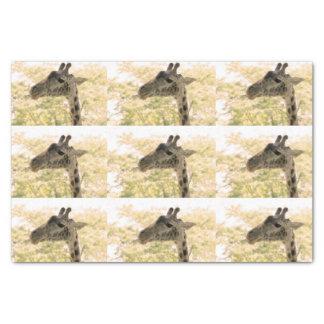 "Snacking Giraffe 10"" X 15"" Tissue Paper"