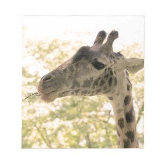 Snacking Giraffe Scratch Pads