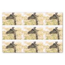 Snacking Giraffe Tissue Paper