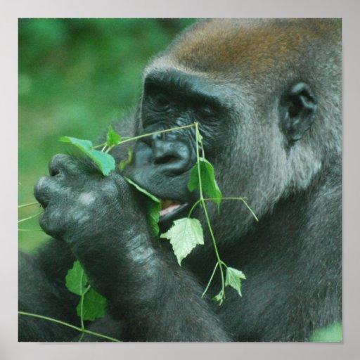 Snacking Gorilla Poster
