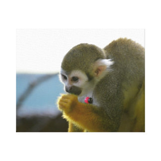 Snacking Squirrel Monkey Stretched Canvas Prints