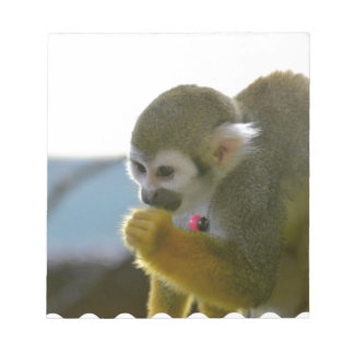Snacking Squirrel Monkey Scratch Pads