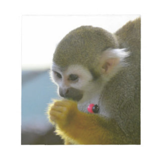 Snacking Squirrel Monkey Note Pads