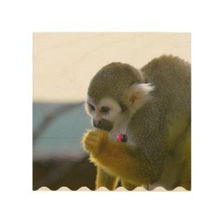 Snacking Squirrel Monkey Wood Prints