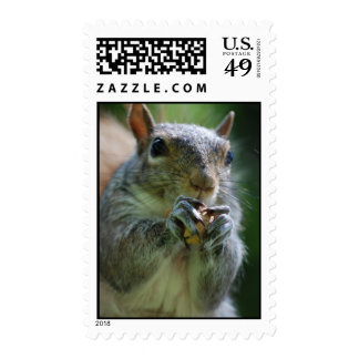 Snacking Squirrel Postage Stamp