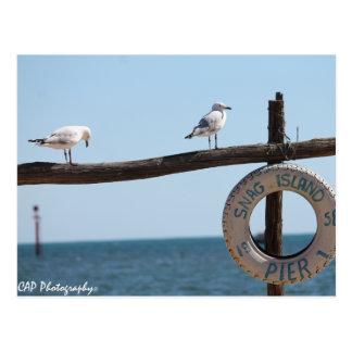 Snag Island Firends Postcard