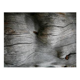 Snag wood texture background postcard