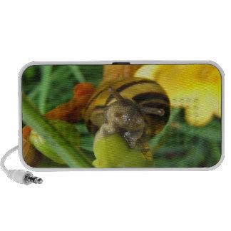 Snail 186 speaker