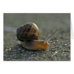 Snail 1 Note Cards