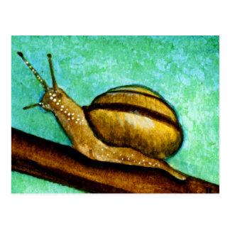 Snail 1 Postcard