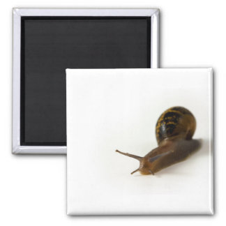 Snail 2 Inch Square Magnet