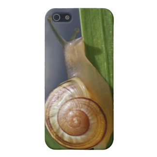 Snail 96 ~ case cases for iPhone 5
