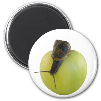 Snail and apple 2 inch round magnet