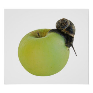 Snail and apple posters