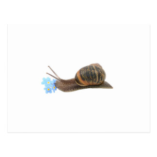 Snail and flowers postcard