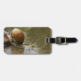 Snail and Reflection in Water Luggage Tag