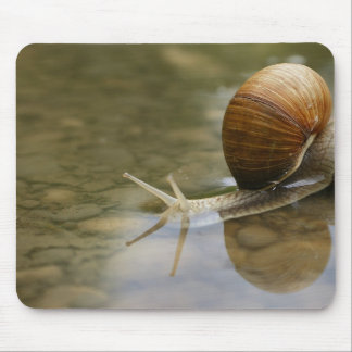Snail and Reflection in Water Mouse Pad