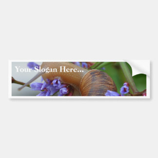 Snail Animal Bumper Sticker