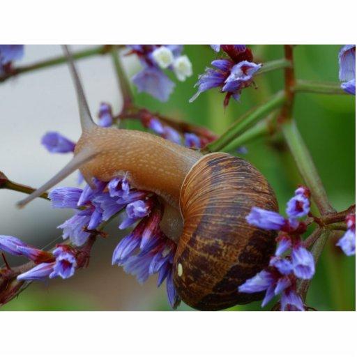 Snail Animal Photo Cutouts