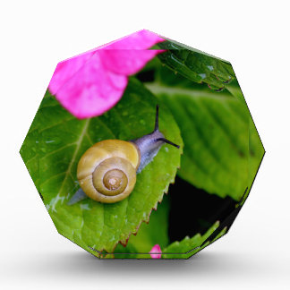 snail award