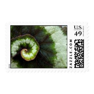 Snail Begonia Leaf Postage Stamps